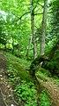 Dilijan National Park, Path way to Aghavnavank 09.jpg