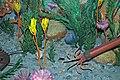 Diorama of a Cincinnatian seafloor (Late Ordovician) - crinoids, corals, clams, nautiloid, algae (30675803617).jpg