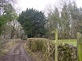 Dollywood Lane - geograph.org.uk - 126518.jpg