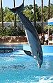 Dolphin 7 (15115797303).jpg