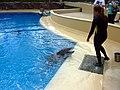 Dolphins (7980906441).jpg