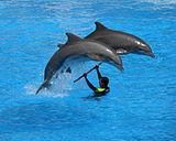 Dolphins at Loro Parque 04-crop.JPG