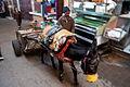 Donkey in medina in Fes (5364342999).jpg