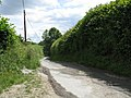 Down the lane - geograph.org.uk - 846942.jpg