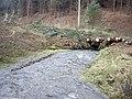 Downstream Lag Burn - geograph.org.uk - 1577086.jpg