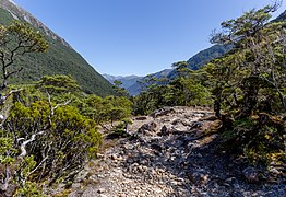 Dudley Knob - view south, New Zealand.jpg