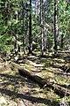 Dulbju acs purva dabas lieguma ziemeļdaļas mežs.jpg