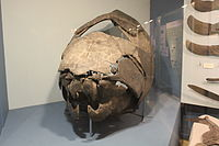 Dunkleosteus at Cleveland Museum of Natural History big.jpg