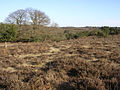 Eastern edge of Ocknell Plain, New Forest - geograph.org.uk - 128199.jpg