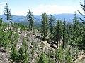 Ecological Restoration at Refuge Lake (6351830664).jpg
