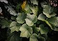 Eddie's Garden (19787130994).jpg