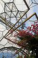 Eden Project Hibiscus Flower (3983226639).jpg