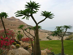 Ein Gedi (kibbutz) - Botanical Garden along the Dead Sea coast