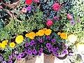 El Zohour Showroomمعرض الزهور بحديقة الاورمان 3.jpg