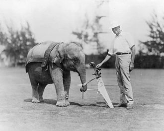 History of golf - A young trained elephant used as a caddy on a Florida golf course in 1922