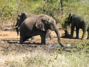 File:Elephant drinking water - KNP - 001.ogv