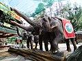 Elephants Safari Park Cisarua.JPG