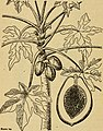 Emergency food plants and poisonous plants of the islands of the Pacific (1943) (20665888874).jpg
