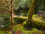 Enchanted Walk Cradle Mountain-Tasmania-Australia 130202 7237.jpg