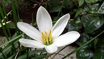 Endangerd Flora.jpg