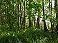 Erlenbruchwald - panoramio.jpg