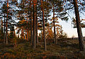 Evening light (4589480043).jpg
