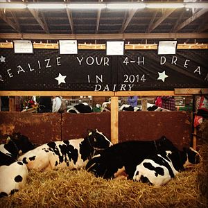 Windsor, Nova Scotia - 4H dairy display at Hants Co. Exhibition in 2014