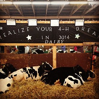 Windsor, Nova Scotia - 4H dairy display at Hants Co. Exhibition in 2014