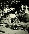 Expeditions organized or participated in by the Smithsonian Institution.. (1910) (14779575401).jpg