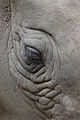 Eye of a rhino (6902637896).jpg