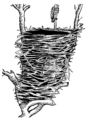 Eyrie (PSF).png