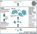 Factors in the population dynamics of freshwater cyanobacteria.jpg