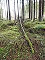 Fallen tree2.jpg