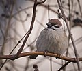 Featherball (46460649205).jpg