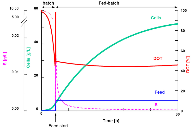 model for fed batch penicillin production Mathematical model for fed-batch penicillin-g fermentation based on work described by bajpai and reuss (1980), the mass balances for fed batch fermentation of p chrysogenum to produce.