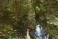 Finkenbach bei Bramstedt.jpg