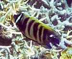 Fish 10 (22818527718).jpg