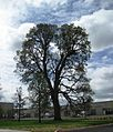 Five Oaks at West Union single - Hillsboro, Oregon.JPG