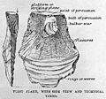 Flint flake with side view and technical terms. Wellcome M0015947.jpg