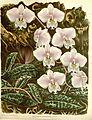 Flore des serres v15 115a.jpg