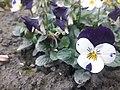 Flower20180125 151131.jpg