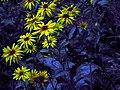 Flowers of Iran گلهای ایران 02.jpg
