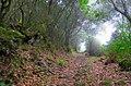 Fog forest - Nebelwald (30297793080).jpg
