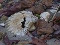 Foliage & Fossil (6279993161).jpg