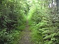 Footpath from Rosemary Lane - geograph.org.uk - 1960647.jpg