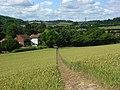 Footpath through wheat, Radnage - geograph.org.uk - 892075.jpg