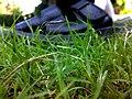 Footwear on Grass.jpg