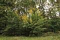 Forêt Départementale de Méridon à Chevreuse le 29 septembre 2017 - 48.jpg