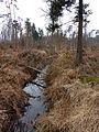 Forêt de Haguenau en hiver.jpg