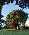 Forde Park, Newton Abbot - geograph.org.uk - 1029572.jpg